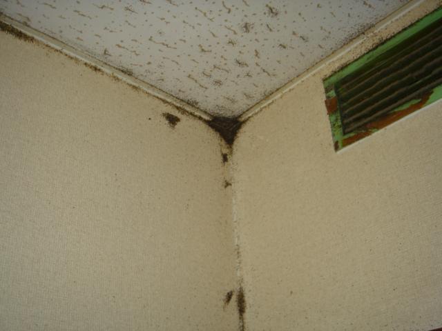 大阪の害虫駆除・ゴキブリ駆除・ネズミ駆除・シロアリ駆除・蜂の巣駆除はご相談を!