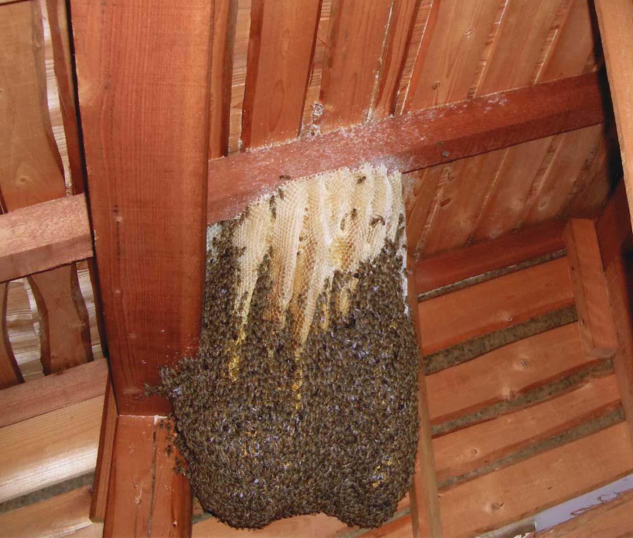 ミツバチの巣